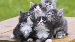 hd wallpaper cats 1080p