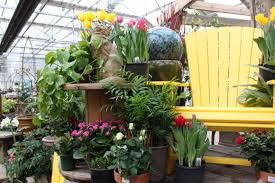nursery shrubs evergreens trees cur specials whoopsie daisy guarantee 18198241 1383229238403062 3349120319674003443 ncopy jpg