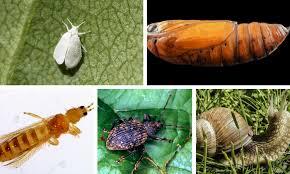 garden pest. Garden Pest Control I