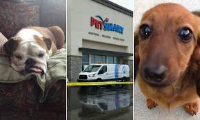 dogs killed injured at petsmart and petco s don t let your companion be next