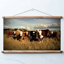australian country cow wall decor country decor australia nature landscape nature photography print poster print art print on country style wall art australia with australian country cow wall decor country decor australia nature