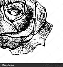 эскиз татуировки розы крупным планом векторное изображение