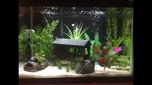 Fish Tank Natural Fish Tank Decoration Ideas Youtube