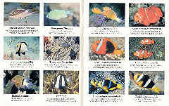 Australian Reef Fish Species Chart Oceans Enterprises Underwater Books Diving Books