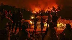 İzmir Karabağlar'da orman yangını