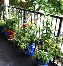 bucket gardening. Easy Container Gardening Bucket