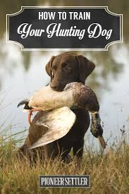 Best 25+ Duck hunting dogs ideas on Pinterest | Hunting dogs, Man ...