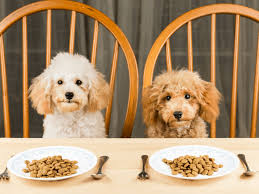 Toy Poodle Feeding Chart Top 5 Best Dog Foods For Toy Miniature And Standard Poodles