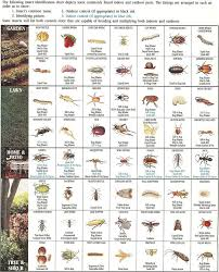 Insect Identification Chart Garden Insects Insect