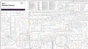 Electronic Version Of The Biochemical Pathways Chart The T
