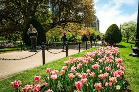 just when you think a boston winter will never end spring brings the city a dose of flower power the boston public garden is home to beautiful petals and