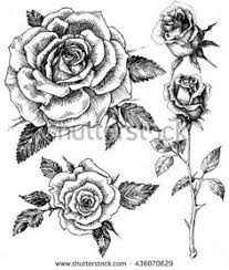 Small Picture Single roses drawing set Tats Pinterest Single rose Rose