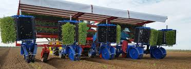 The ferrari futura twin is a fully automated transplanter that can work with vegetables planting celeriac with an full automatic ferrari futura twin 12 row planter from contrator j.c. Ferrari Tobacco Transplanter Page 1 Line 17qq Com