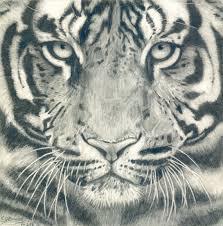 tiger face drawing pencil. Perfect Face Beautiful Tiger Face Drawing For Sale On Etsy For Tiger Face Drawing Pencil Pinterest