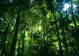 tropical rainforest raining.  Tropical Tropical Rain Forest With Rainforest Raining I