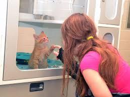 Stratford Perth Human Society at capacity for <b>cats</b>, <b>looking outside</b> ...
