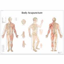 Acupuncture Chart Poster Body Acupuncture Chart
