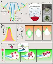 membrane grasse