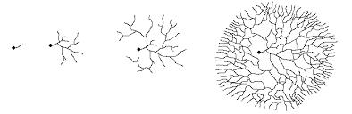mycelial form myceliumg gif