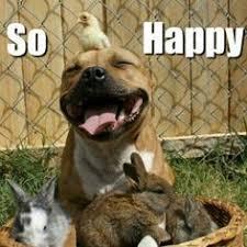 Memes Vault Happy Animal Memes via Relatably.com