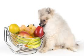 Fruits for pets