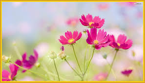 Beautiful Flowers And Quotes Best Of The Best Flower Quotes Wallpaper Of Style And Trends The Flowers