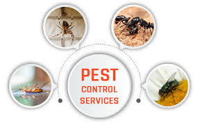 Pest Control Services in Coimbatore - Unique Pest Control Service Provider  in Coimbatore
