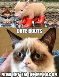 grumpy cat smiling is contagious. Beautiful Contagious Bestfunniestgrumpycat2 And Grumpy Cat Smiling Is Contagious L