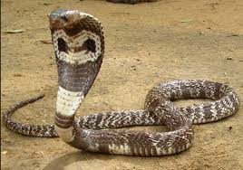 Snake Identification Chart Upload Your Information Snakes Identification Service Of