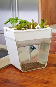 Self Cleaning Fish Tank Garden 19 Best Aquariums Images On Pinterest Architecture Tanked