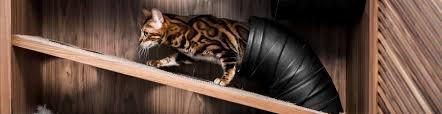 Gör plats för din katt med The <b>Cat Flat</b> | Hyr förråd helt enkelt ...