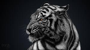 white tiger wallpaper desktop. Wonderful Wallpaper White Tiger Wallpapers  Get Free Top Quality For  Your Desktop PC Background Ios Or Android Mobile Phones At WOWHDBackgroundscom To Wallpaper Desktop
