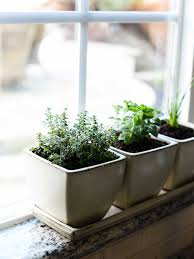 Kitchen Herb Garden Indoor How To Start An Indoor Herb Garden Kitchen Confidante