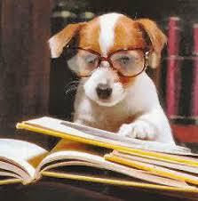 """Résultat de recherche d'images pour """"chien avec des lunettes"""""""