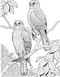 Bird coloring pages printable coloring pages for kids printable coloring pages are fun and can help children develop important skills. Free Printable Adult Coloring Pages Birds Coloring Page For Adults Adult Coloring Pages