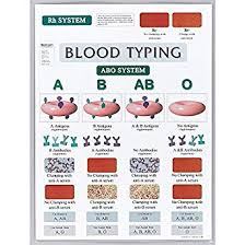 Abo Blood Compatibility Chart Blood Typing Chart