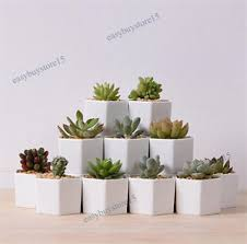 office planter. Image Is Loading 1x-Hexagon-White-Ceramic-Succulent-Planter -Miniature-Flower- Office Planter L