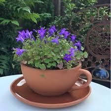 teacup planter large weston mill