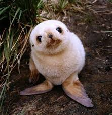 cute animal. Plain Animal 17 Baby Seal Intended Cute Animal R