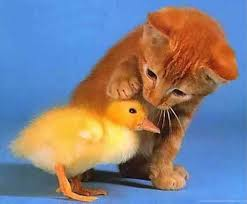 baby animals wallpapers.  Animals To Baby Animals Wallpapers P
