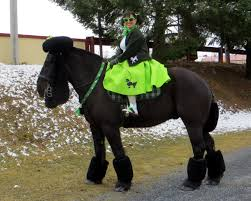 Pony Costume Ideas Pony Pack Crayon Group Horse And Rider Costume Horsey