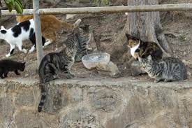 animal sheltering magazine animal sheltering online by the a online database helps trap neuter return programs track community cat colonies