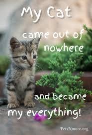 Pets N More Top Cat Quotes Magnificent Cat Quotes