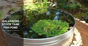 galvanized stock tank fish pond the