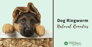 natural dog ringworm remes home treatment for on dogs