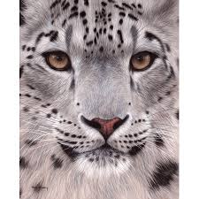 rachel stribbling stretched canvas art snow leopard face small 8 x 4 inch wall on snow leopard canvas wall art with rachel stribbling stretched canvas art snow leopard face small 8