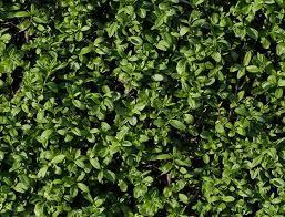 25 Stunning Grass Textures Backgrounds UTemplates