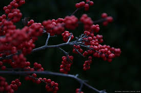 Aesthetic Holiday Winterberry Holiday Wreath Making Natural Designs Riding
