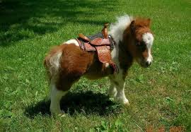 baby mini horse. Contemporary Horse Best Images Pictures And Photos About Baby Horses In Farm  How Long Do  Live For Baby Mini Horse
