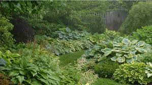 5 ways to design with hostas be inspired